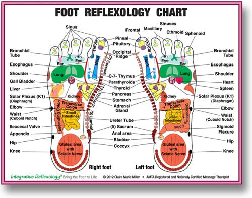 Integrative Reflexology With Claire Marie Miller Massage Therapy